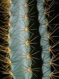 De prikkelingen van de cactus Stock Fotografie