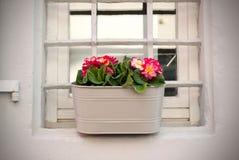 De primula bloeit pot met kleurrijke bloemen op het terras in de lente De roze primula bloeit metaalbeige in potten royalty-vrije stock afbeeldingen
