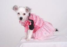 De Prinses van het puppy Royalty-vrije Stock Fotografie