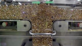 De productie van de tabaksindustrie stock footage