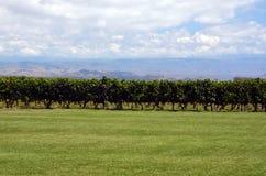 De productie van de wijn stock afbeelding