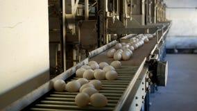 De productie van kippeneieren, gevogelte, kippeneieren gaat door de transportband voor het verdere sorteren, close-up, transportb stock video