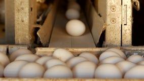 De productie van kippeneieren, gevogelte, kippeneieren gaat door de transportband voor het verdere sorteren, close-up, gevogelte stock videobeelden