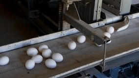 De productie van kippeneieren, gevogelte, kippeneieren gaat door de transportband voor het verdere sorteren, close-up stock footage