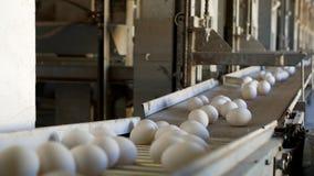 De productie van kippeneieren, gevogelte, kippeneieren gaat door de transportband voor het verdere sorteren, close-up, fabriek stock footage