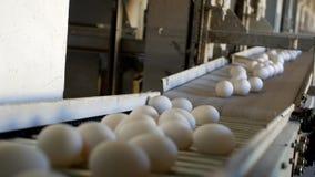 De productie van kippeneieren, gevogelte, kippeneieren gaat door de transportband voor het verdere sorteren, close-up, fabrieksei stock videobeelden