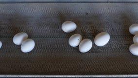 De productie van kippeneieren, gevogelte, kippeneieren gaat door de transportband voor het verdere sorteren, close-up, de landbou stock footage