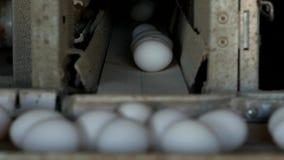 De productie van kippeneieren, gevogelte, kippeneieren gaat door de transportband voor het verdere sorteren, close-up, vervoerder stock footage
