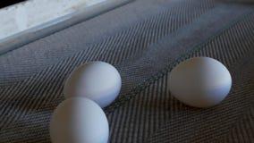 De productie van kippeneieren, gevogelte, kippeneieren gaat door de transportband voor het verdere sorteren, close-up, vervoerder stock videobeelden