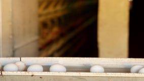 De productie van kippeneieren, gevogelte, kippeneieren gaat door de transportband voor het verdere sorteren, close-up, vervoerder stock video