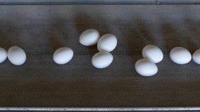 De productie van kippeneieren, gevogelte, kippeneieren gaat door de transportband voor het verdere sorteren, close-up, zaken stock video