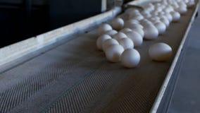 De productie van kippeneieren, gevogelte, kippeneieren gaat door de transportband voor het verdere sorteren, modern close-up, stock footage