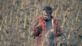 De professionele landbouwer houdt een droge zonnebloem in handen, typt dan op een tablet stock footage