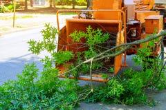 De professionele tuinlieden zetten de takken van een in orde gemaakte boom in houten chipper en een pick-up en onderhoud in de le stock foto