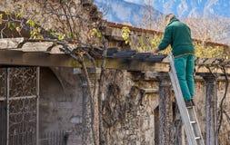 De professionele tuinman bereidt installaties in de lente in de openbare tuin voor Royalty-vrije Stock Afbeelding