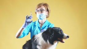 De professionele vrouwelijke dierenarts geeft een injectie stock video