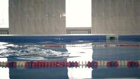 De professionele zwemmer die een schoolslag in lichte pool, camera zwemmen volgt hem op een pool` s grens stock video