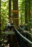 ` 04 de promenade d'arbre de ` de séquoias Photo libre de droits