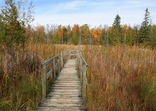 De Promenade van de herfst stock fotografie