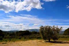 De Provence Royalty-vrije Stock Foto's