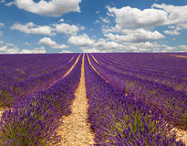 De Provence frankrijk Stock Foto
