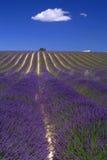 De Provence - Heuvel van lavendel Stock Afbeelding