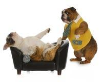 De psychologie van de hond Royalty-vrije Stock Afbeeldingen