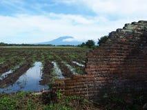 De Puinmuur en Geïrrigeerd Paddy Field With de Vulkaan op de Achtergrond Royalty-vrije Stock Foto's
