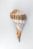 De Puist Shell van de bliksem stock afbeeldingen