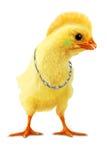 De punker van de kip stock afbeeldingen