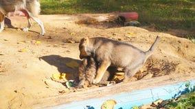 De puppy eten van een kom in de straat stock video