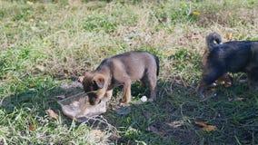 De puppy eten van een kom in streetm stock footage
