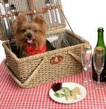 De Puppy van de picknick Stock Foto's