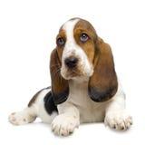 De Puppy van de stilte