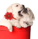 De puppy van Kerstmis stock foto's