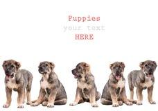 De puppy van Yong 3 maanden leeftijds. royalty-vrije stock afbeeldingen
