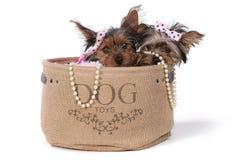 De Puppy van Yorkshire Terrier omhoog Gekleed in Roze Royalty-vrije Stock Afbeeldingen