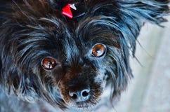 De puppy zijn voor altijd Royalty-vrije Stock Foto