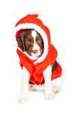 De puppyhond kleedde zich als Santa Claus Royalty-vrije Stock Fotografie