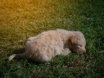 De puppyslaap onder de zon royalty-vrije stock afbeelding