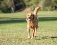 De puppyspeeltijd maakt deze hond gelukkig Stock Foto