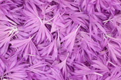 De purpere achtergrond van bloembloemblaadjes stock foto