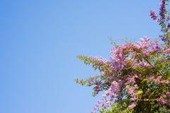 De purpere achtergrond van de bloemen blauwe hemel Royalty-vrije Stock Afbeeldingen