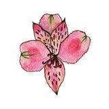 De purpere bloem van de leliewaterverf Stock Afbeeldingen