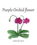 De purpere bloem van de orchideewaterverf Royalty-vrije Stock Afbeelding