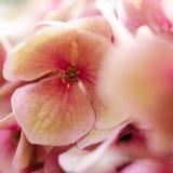 De purpere bloemblaadjes Royalty-vrije Stock Foto