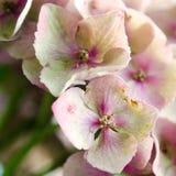 De purpere bloemblaadjes Royalty-vrije Stock Fotografie