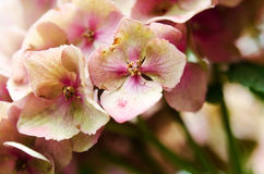 De purpere bloemblaadjes Stock Foto's