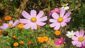 De purpere bloemen royalty-vrije stock foto