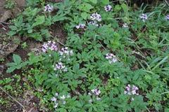 De purpere bloemen bloeiden op het gebied Mooi in de lente royalty-vrije stock afbeeldingen